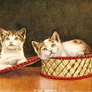 """Wide Awake"" Kittens/Cats in a Basket Postcard"