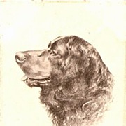 Vintage Artist Spaniel Dog Head 1906 Postcard