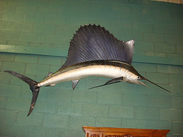 Original Antique Full Sized Large Wall Hung Swordfish Mounted Sailfish Bill-Fish Antique Taxidermy