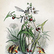 Original Signed Grandville French  Engraving 'Fleche-D'Eau' 1867 from Les Fleurs Animees.