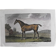 """Lithograph Print of John Scott engraving of horse """" Whiskey Got By Saltram"""" from 1798 : circa 1872"""