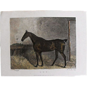 """Lithograph Print of John Scott engraving of horse """"L. O. P."""" from 1828: circa 1872"""