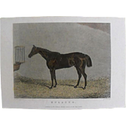 """Lithograph Print of J Weble engraving of horse """" Mulatto"""" from 1828: circa 1872"""