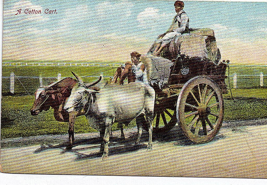 Early 1900s Black Americana Postcard A Cotton Cart