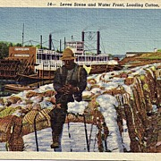 Early 1900s Black Americana  Real Life Linen Postcard Levee Scene And Waterfront Loading Cotton Memphis Tenn