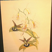 "John Gould ""GLAUCIS FRASERI"" Hummingbirds w/ blue & green iridescence"