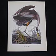 Vintage Audubon Great Blue Heron Print