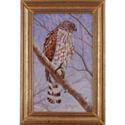 Immature Cooper's Hawk, Miniature Oil Painting by Beverly Abbott
