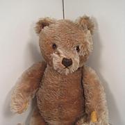 Steiff's Medium Sized Carmel Colored Original Teddy Bear With ID