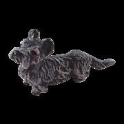 Tiny Terrier Austrian Bronze Vienna Yorkie or Similar Breed