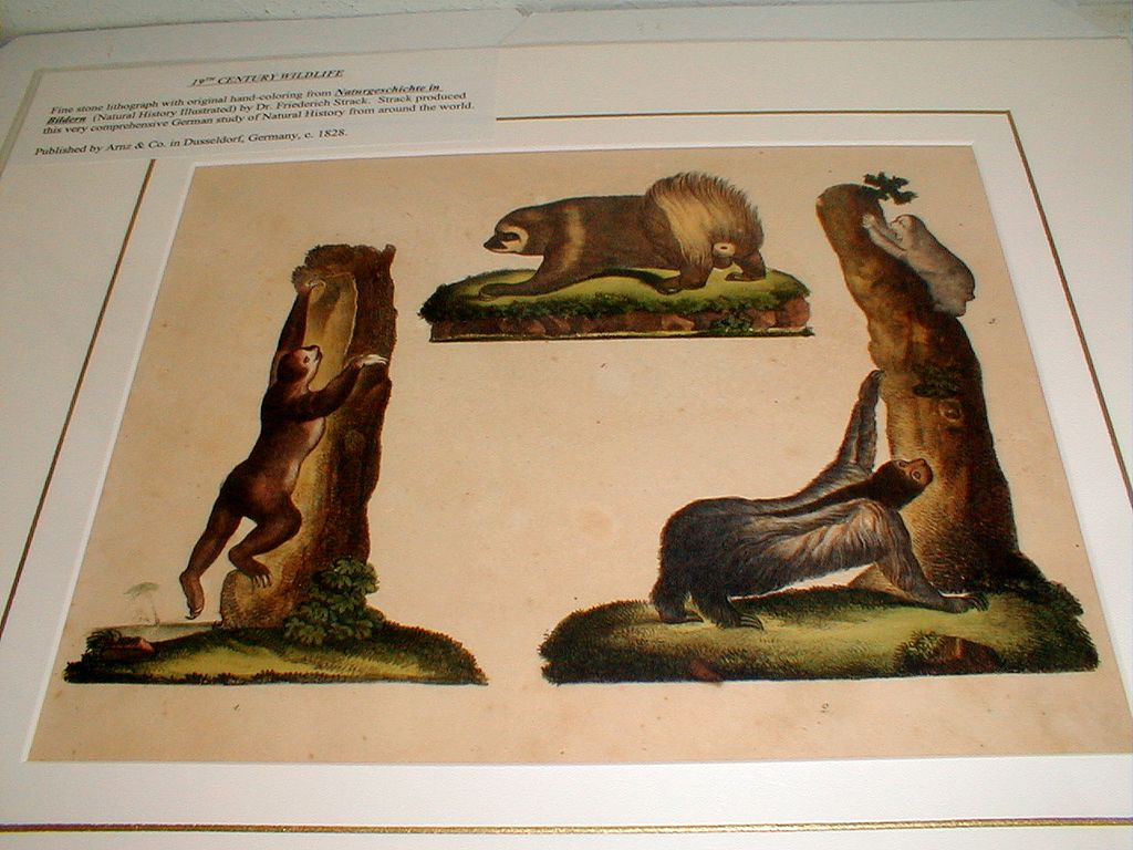 19th Century Wildlife Lithograph by Frederick Strack