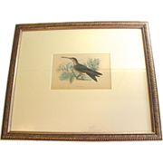 Beautiful Hand-Colored Engraving of Hummingbird