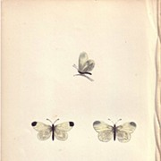 Lovely Hand-Colored Engraving Butterfly WOOD WHITE, Morris