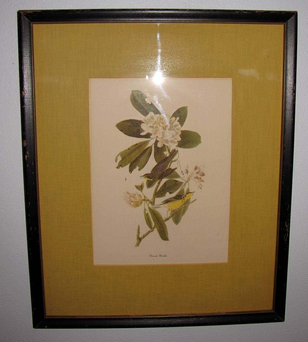 Lovely Framed and Matted Audubon Bird Print, CANADA WARBLER