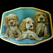 Cocker Spaniel Puppies, English Toffee Tin