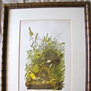 Lovely Framed Audubon Print, MEADOW LARK