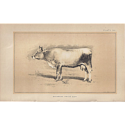 Bi-Color Lithograph Bavarian Prize COW c. 1888 Julius Bien