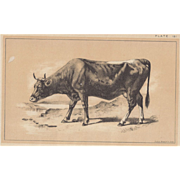 Bi-Color Lithograph PINZGAUER RACE c. 1888 Julius Bien