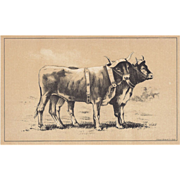 Bi-Color Lithograph Bavarian Working CATTLE c. 1888 Julius Bien