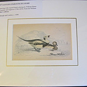 19th Century Engraving by LIZARS, Matted, Longtailed or Northern HARELD