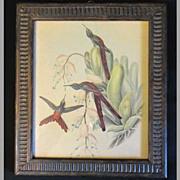 Vintage Framed Print of Hummingbirds