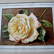 C1860 Bridal Rose Print Chromolithograph Rose