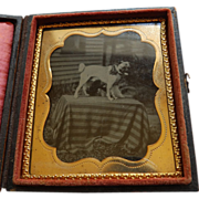 Cased 6th Plate Tintype Dog On Table